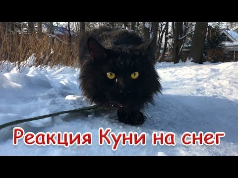 РЕАКЦИЯ МЕЙН-КУНА КУНИ НА СНЕГ / Maine coon sees snow for the first time