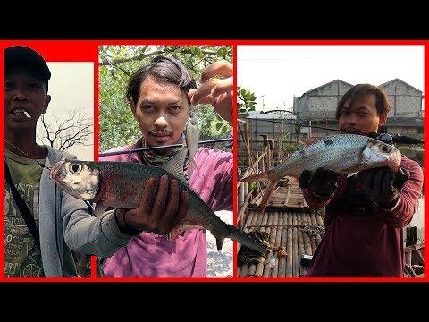 Casting Ikan TARPON TERBESAR Dan Terkecil Dalam Hidup Saya (43cm)