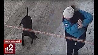 Бойцовский пёс нападает на беременную. Видео!