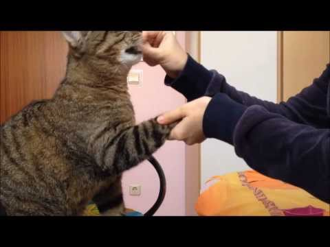 Cat trick #1|| Give a paw