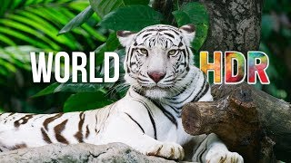 The World in HDR in 4K (ULTRA HD) thumbnail