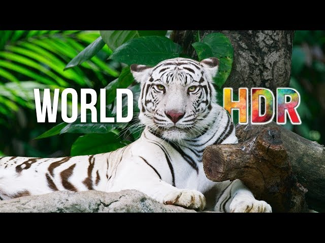 The World in HDR in 4K (ULTRA HD) #1