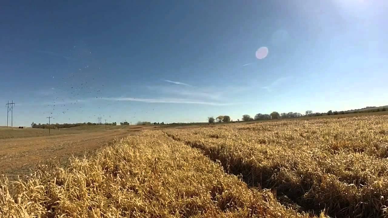 South dakota pheasant hunting youtube for South dakota out of state fishing license