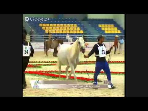 The 6th Sharjah National Arabian Horse Festival - Straight Egyptian Bred 11-Dec-2013 to 12-Dec-2013