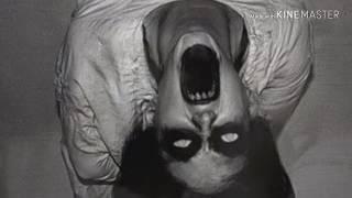 Paranormal:Vale da Escuridão