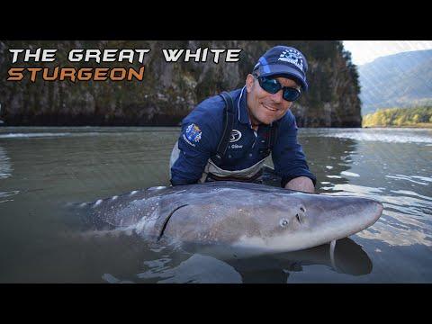 Wild Water Adventures part 28. - A big white sturgeon.
