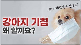 강아지 기침의 원인과 …