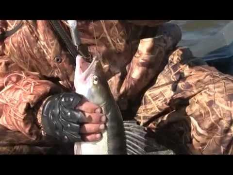 """Рыбалка в Астрахани. Судак. База """"Верхнелебяжье fish resort"""""""