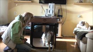 Bundle. 8.  Taming A Feral Dog.  Day 12 Crate Training 3 Wmv
