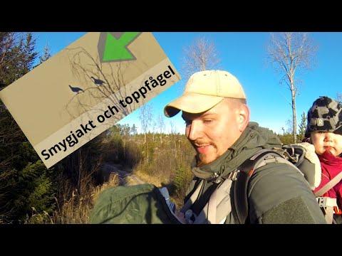 Säsongens Första Toppjakt + Smygjakt #toppfågeljakt | Hunting Family