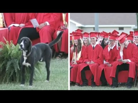 Dog Steals The Show During Graduation Ceremony
