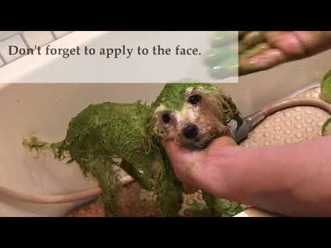 Bathing your dog with Animal Ayurveda