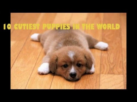Top Cutest Puppies In The World 2016 Lovely Cool Puppy Nice Dog