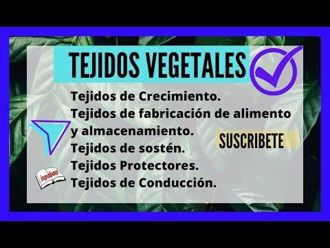 Los Tejidos Vegetales: crecimiento, sostén, protectores, conducción.
