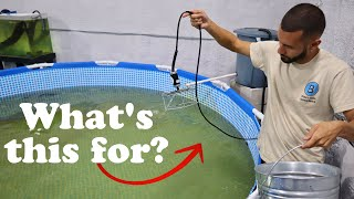 what-are-we-putting-in-our-pool-ponds