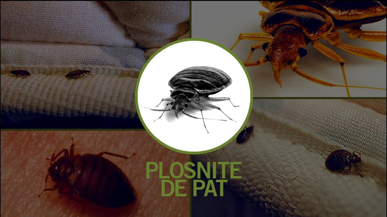 medicament împotriva infestării insectelor