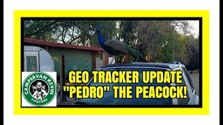 4x4 GEO TRACKER RUINED??? AND PEDRO THE PEACOCK!