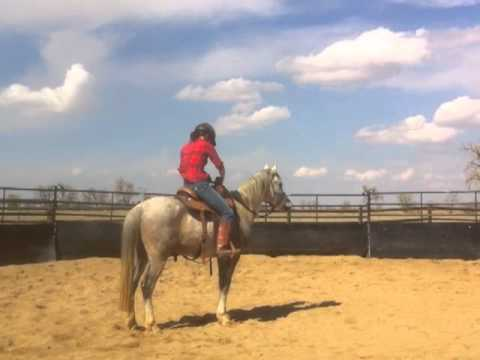 Colorado Horse Rescue - Leo: First Week at MRHT