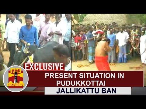 EXCLUSIVE   JALLIKATTU BAN - Present Situation in Pudukkottai   Thanthi TV