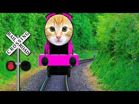 Cute Cats Finger Family Nursery Rhyme Songs