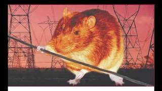 Крысы 03б Клетки: наполнение всяческое