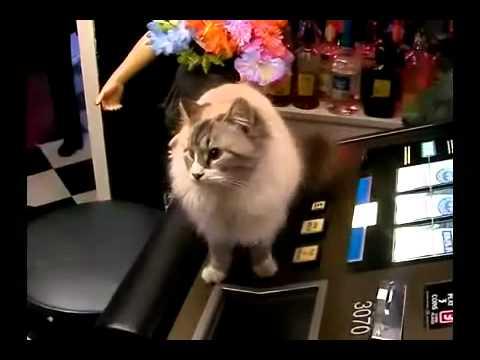 Cats slots youtube