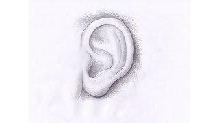 Как рисовать УХО ЧЕЛОВЕКА карандашом. Урок 64. How to draw the human ear with a pencil.