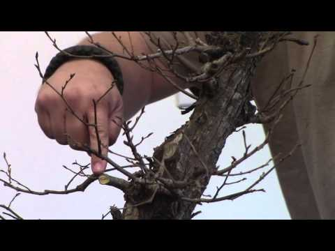 american elm spring  2016 pt 1