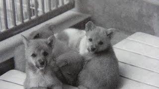 TOKIOの新曲に、動物愛護ソングを! 私は、TOKIOのファンです。アイドル...
