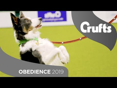 The Best Behaved Dogs - Obedience is back at Crufts 2019!