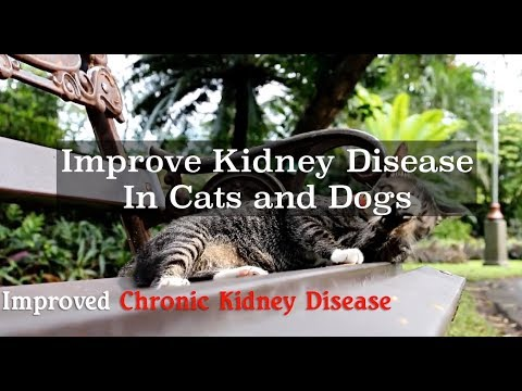 Cat and Dogs with Kidney Disease
