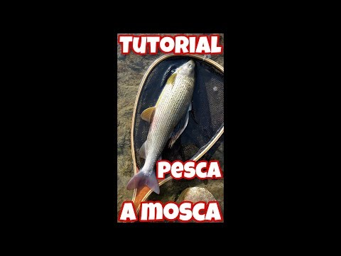 PescaSub: SPECIALE NATALE from YouTube · Duration:  4 minutes 26 seconds