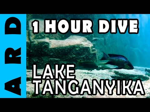 1 hour dive in Lake Tanganyika - Chimba, Zambia