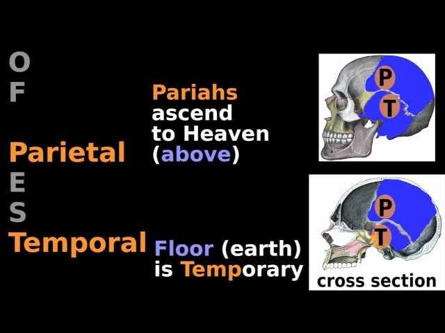 Skull Anatomy Mnemonic (1/3): Bone Tutorial- Neurocranium: Sphenoid Ethmoid Parietal Temporal Bones