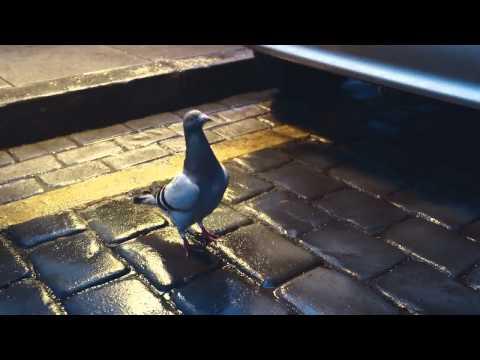 Virgin Money Advert - Dancing Pigeon - full song