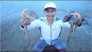 阿烽去出水礁抓狗鲨,休渔期这种鱼特别贵,一条四斤多却被直接放生了