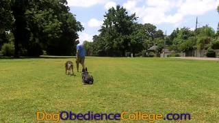 Dero Dog Training Class Memphis