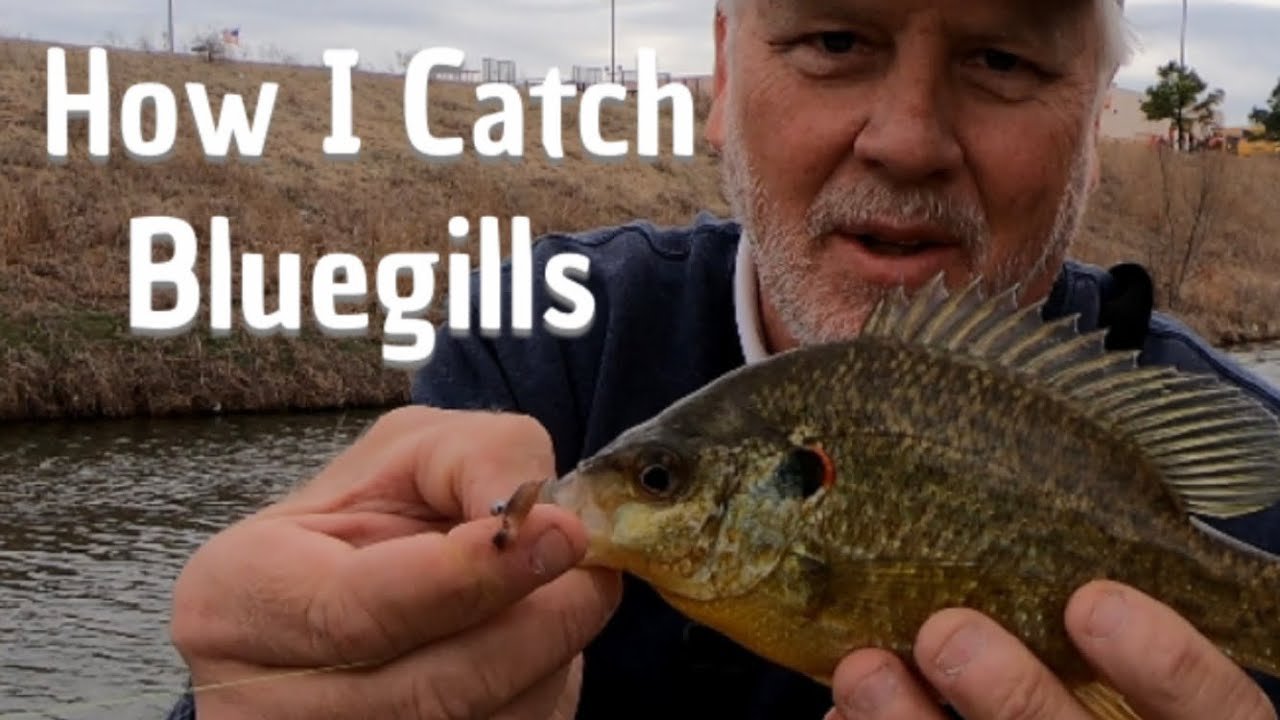 what bait to use to catch bluegill