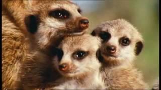 """Видео BBC """"Красота животного мира Земли"""". 3 марта Всемирный днём дикой природы"""