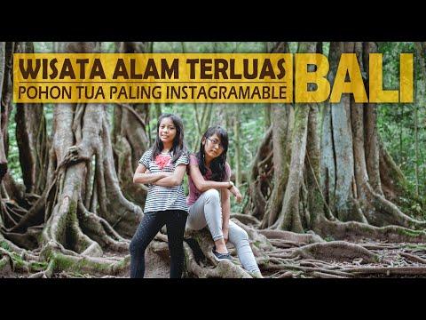 Kebun Raya Bedugul   Wisata Alam   Pelangi Bali