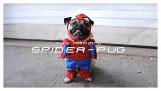 SPIDER-PUG - Doug The Pug