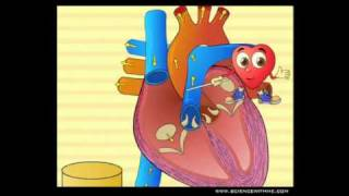 Learn about the Heart - Preview Video from ScienceWithMe.com