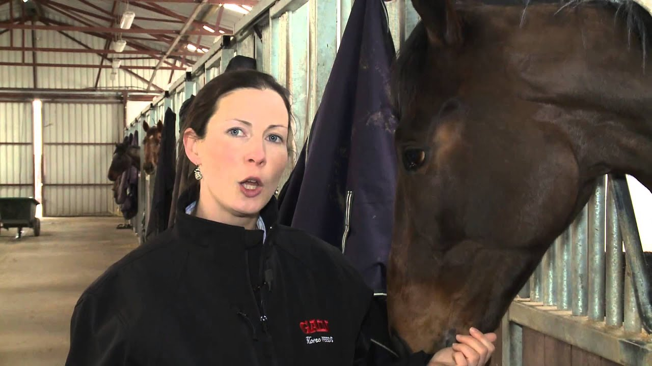 Equine Nutrition Advice | Horse Nutritional Advice From Gain