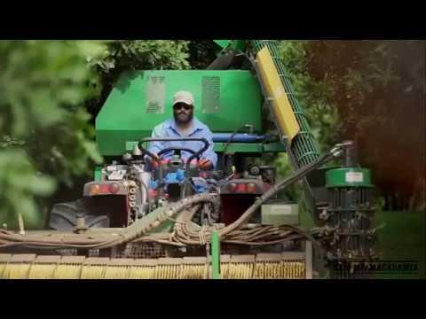 Hạt macca - Ban Me Macadamia & Australian macadamias