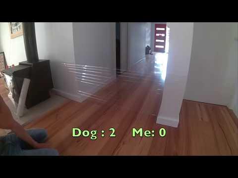 Dog Prank , Cling Wrap