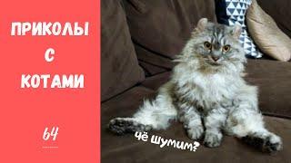 Смешные КОТЫ КОТИКИ КОТЯТА Приколы с животными 64