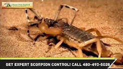 Scorpion Control Apache Junction AZ 480-493-5028 Ozone Pest Control