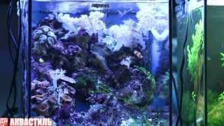 Рыба-клоун (Amphiprion ocellaris) в морском аквариуме. Аквариумные рыбки. Аквариумистика.(На видео аквариумная рыбка клоун Amphiprion ocellaris в морском аквариуме с коралловыми полипами. Смотрите подробне..., 2013-07-01T15:21:27.000Z)