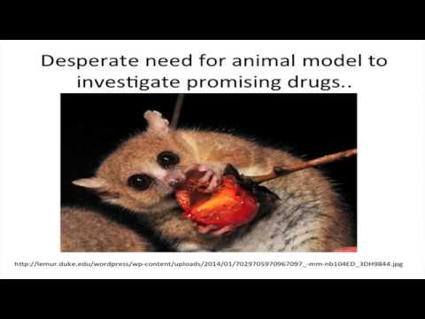"Steven N. Austad, ""Small-bodied primates: a critical need for aging research"""