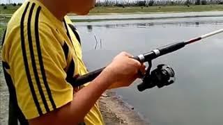 Жарим вкусную рыбку карасика с хрустящей корочкой)